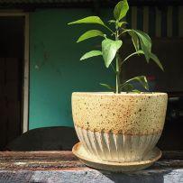 Inji Pots Down South Plant Pots